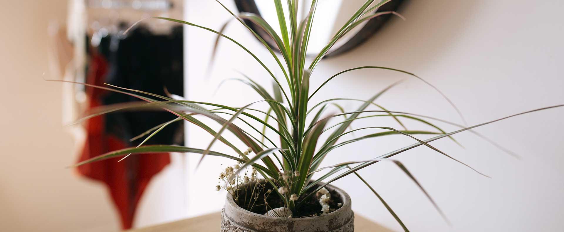 Plante-lingerie-suspendu-atelier
